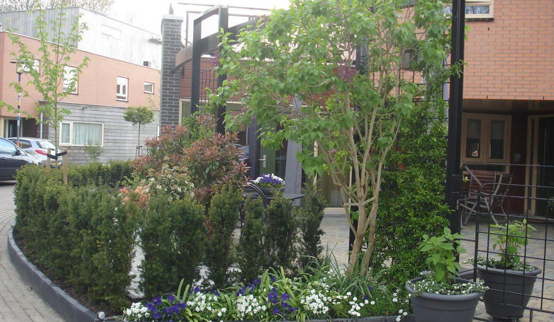 Vaste planten en planten.