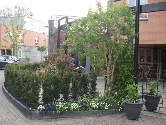vaste planten planten