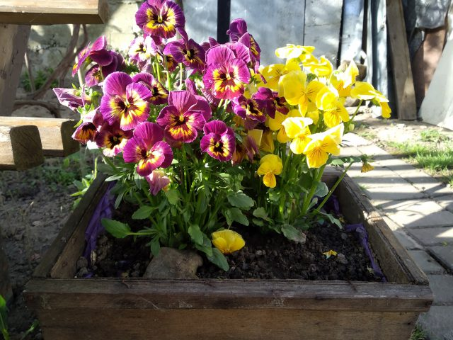 Zo creëer je een sfeervolle tuin met een klein budget!