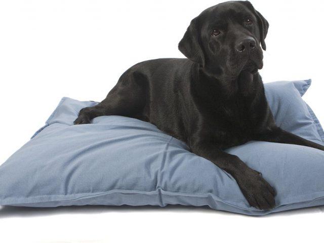 Nieuw: hondenbedden voor elke interieurstijl