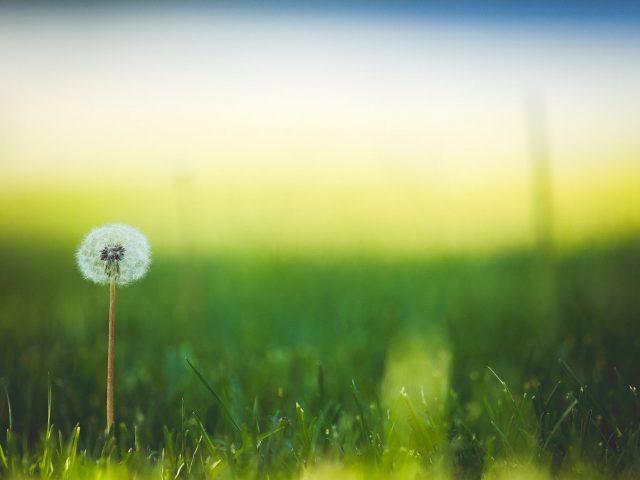 Graszoden plaatsen of gras zaaien?